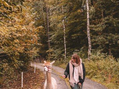 Nachhaltig in Österreich: 5 Dinge, die man im Pielachtal unbedingt tun sollte