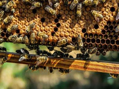 Sitzstreik: Bienen besetzten gestern den Stephansplatz