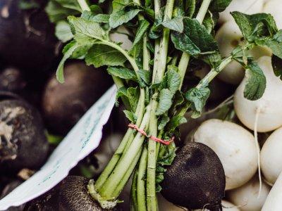 Regionales Winter-Gemüse im Überblick