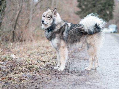 Sicherheit beim Gassi dank Hunde GPS-Tracker