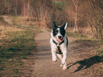 Strecken fürs Laufen mit Hund in Wien