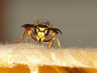 Wespen, Mücken, Zecken: Erste Hilfe bei Insektenstichen