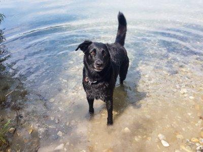 Badeteich Süßenbrunn: Die neue Hundefreilaufzone
