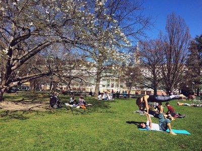 Schöne Orte zum Picknicken in Wien