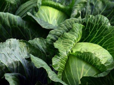 Ein Kraut gegen jedes Wehwehchen – regionales Lebensmittel für die Wintermonate mit Immun-Boost