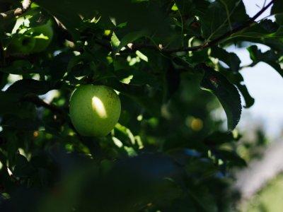 Eine Reise zur #BioApfel Ernte mit Zurück zum Ursprung