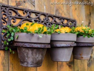 Was tun mit leeren Töpfen im Spätsommer? Dekorationsidee für Blumentöpfe im Herbst