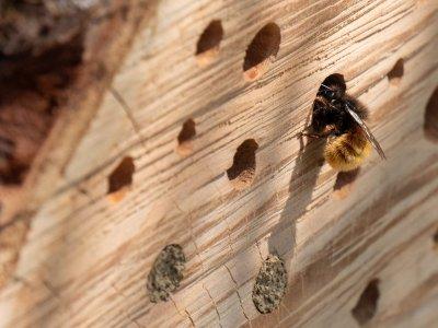 So machst du deinen Balkon bienenfreundlich