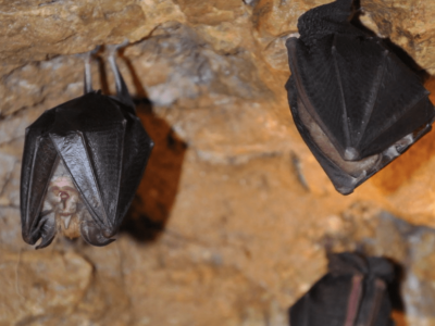 Die coolsten Höhlen in Niederösterreich