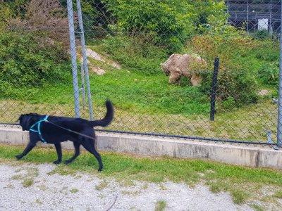 Der Bärenwald Arbesbach: Auf vier Hundepfoten zu den Bärentatzen.