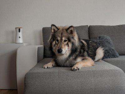 Erwischt – Milo allein zu Haus