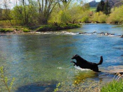 Das Pielachtal: Flussbaden mit und ohne Hund.