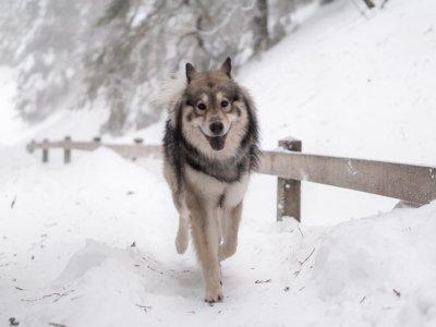 Milo – ein Wolf auf Reisen