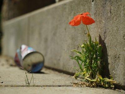 8 Dinge, die du kennst, wenn du als Wiener Stadtkind aufs Land fährst