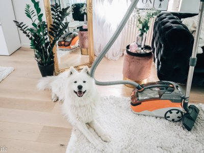 /Anzeige/ FELLWECHSEL – clevere Tipps gegen Hundehaare im Haus