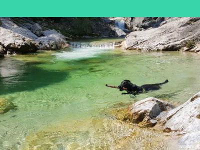 Hundebadeplätze – Ausflugsideen für Hitz und Hund in Österreich