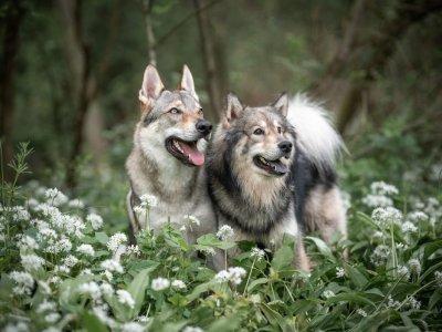 DNA Test für Hunde